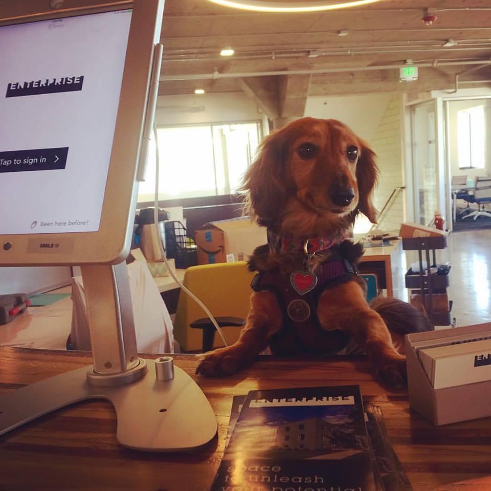 coworking dog